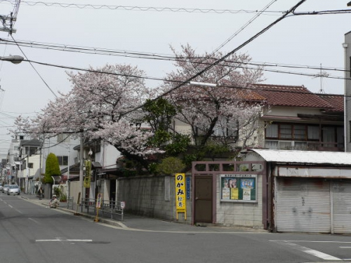 駒川1丁目 桜